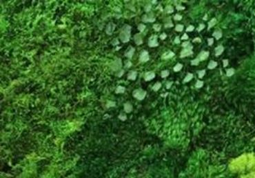 Picture for category MOSS PANELS